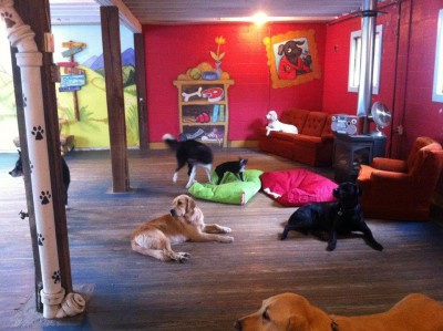 All Play Pet Care & Adventures